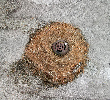 Clogged roof drainage points can cause ponding and additional vegetative growth which can lead to roof leaks.